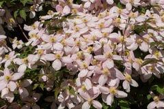 Flore 81 Photos stock