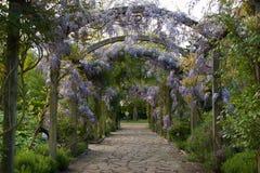 Flore 68 Images libres de droits
