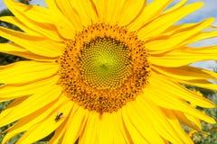 Flore 63 Photographie stock libre de droits