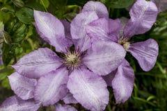 Flore 88 Image libre de droits