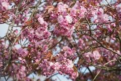 Flore 103 Image libre de droits