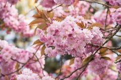 Flore 102 Photo libre de droits