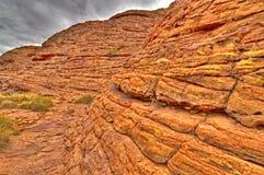 Flore antique de mer en stationnement national des Rois Canyon Photo stock