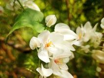 Flore blanche Photographie stock libre de droits