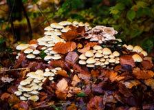 Flore d'automne : champignons dans une forêt Photos stock