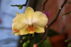 Flore de jardin Photos libres de droits