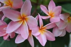 Flore de nature Photographie stock libre de droits