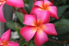 Flore de nature Image stock