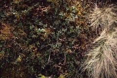 Flore de ressort de fond de texture de paille Photo libre de droits
