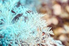 Flore de Volga Images libres de droits