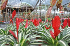 Flore - fleur Photographie stock libre de droits
