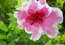 Flore  in the garden. It is a pink flower Royalty Free Stock Photo