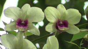 Flore jaune d'orchidée clips vidéos