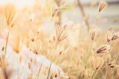 Flore non désirée avec la lumière de jante, rétro style chaud Photos libres de droits