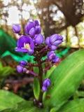 Flore pourpre dans le jardin Photo stock