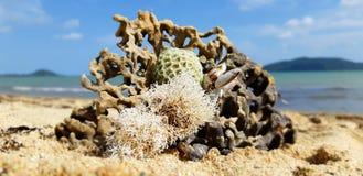 Floreale acquatico fotografie stock libere da diritti