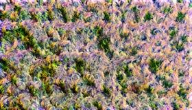Floreale astratto Fotografia Stock