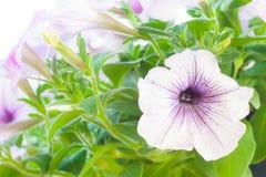 Floreale bianco fotografia stock libera da diritti