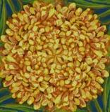 Floreale decorativo variopinto del fondo quadrato senza cuciture astratto giallo del fiore Fotografia Stock Libera da Diritti