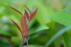 floreale naturale del fogliame verde beautyful delle foglie fotografia stock