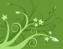 Floreale verde Fotografia Stock
