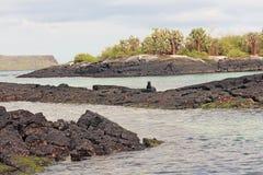 Floreana海岛风景看法  免版税库存图片