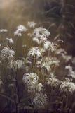 Florece al extranjero Foto de archivo libre de regalías
