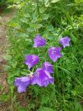 Florece alarmas Imagen de archivo