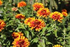 Florece amarillo-naranja Imagenes de archivo