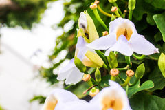 Florece blanco Foto de archivo