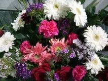 Florece blanco azul violeta rojo Imagenes de archivo
