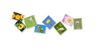 Florece el collage imagen de archivo libre de regalías