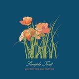 Florece el estampado de flores de las amapolas Fotografía de archivo