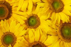 Florece el fondo Fotos de archivo libres de regalías
