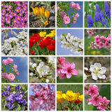 florece el fondo Fotografía de archivo libre de regalías