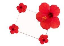 Florece el hibisco alrededor de una tarjeta blanca Imágenes de archivo libres de regalías
