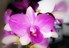 Florece el primer de la planta de la naturaleza foto de archivo