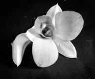 Florece el primer de la planta de la naturaleza al aire libre fotos de archivo