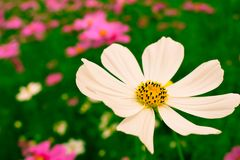 Florece el ` s del mundo hermoso con alrededor del organismo Fotos de archivo libres de regalías