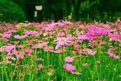 Florece el ` s del mundo hermoso con alrededor del organismo Foto de archivo libre de regalías