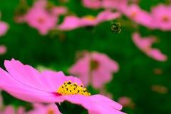 Florece el ` s del mundo hermoso con alrededor del organismo Fotos de archivo