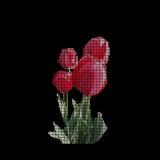 Florece el tulipán fotografía de archivo libre de regalías