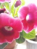 Florece hermoso Imagenes de archivo