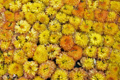 Florece hermoso minúsculo de la floración anaranjada muchos Imagenes de archivo
