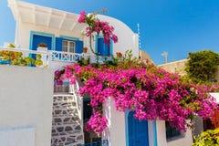 Florece la buganvilla en la ciudad de Fira - Santorini, Creta, Grecia. Fotografía de archivo libre de regalías