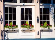 Florece la caja de ventana Charleston Fotos de archivo