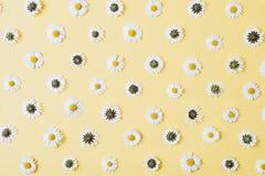 Florece la composici?n Modelo hecho de las manzanillas, p?talos en fondo amarillo en colores pastel imágenes de archivo libres de regalías