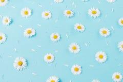 Florece la composici?n Modelo hecho de las manzanillas, p?talos en fondo azul en colores pastel Primavera, concepto del verano fotografía de archivo