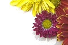 Florece la esquina derecha Imagen de archivo libre de regalías