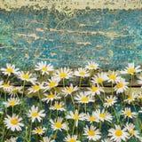 Florece la margarita Imagenes de archivo
